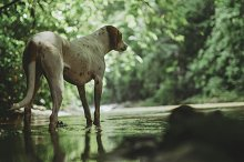 Jungle dog at the river by  in Animals
