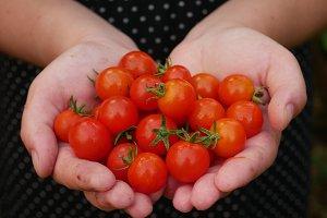cherry tomatoe in hands