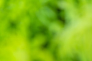 green nature bokeh abstract