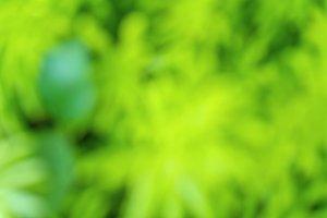 green nature bokeh abstract