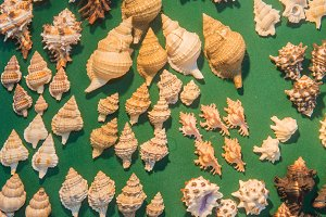 set of various sea shells