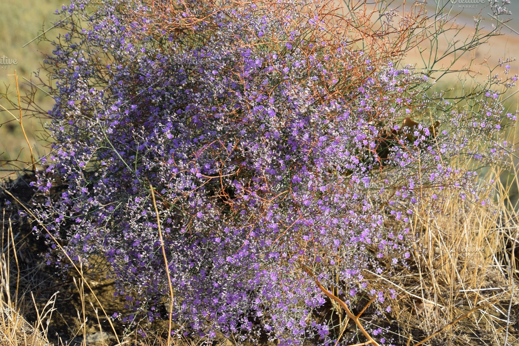 Small Purple Flowers Growing On The High Quality Nature Stock