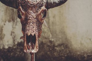 Carved Bull Scull