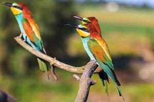 Three exotic birds are sitting on