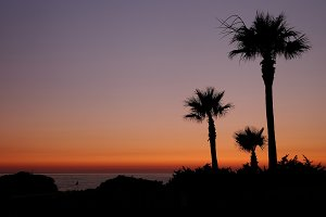 Sunset with palms.