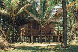 Tropical jungle bungalow