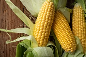 Fresh corn on cobs on rustic wooden