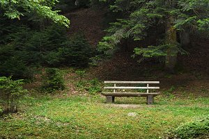 Landscape with bench in forest