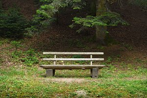 Wooden bench in forest