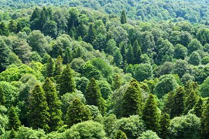 Green forest aerial view