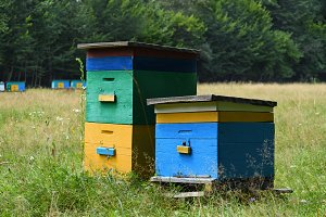 Two wooden beehives on apiary