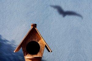 Freedom and Escape Concept