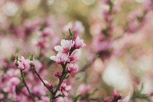 Spring Florals in Pink Portrait
