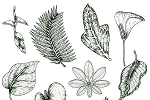 Hand Drawn Tropical Plants Set
