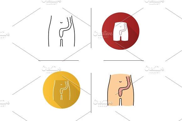 Rectum and anus icon