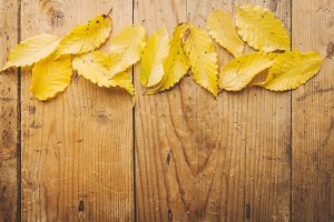 Autumn leaves background on wooden