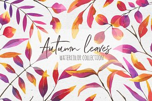 Autumn leaves. Watercolor collection