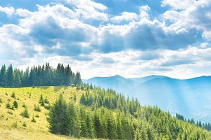 Forest on green hills with blue sky