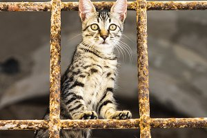 Little cat behind metal bars. Stray