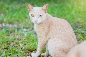 Yellow cat sitting on grass