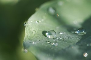 Beautiful dew drops on a green leaf