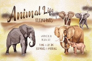 Animal life elephants PNG watercolor
