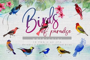 Birds of paradise PNG watercolor set