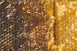 Bee honeycomb texture, wallpaper and