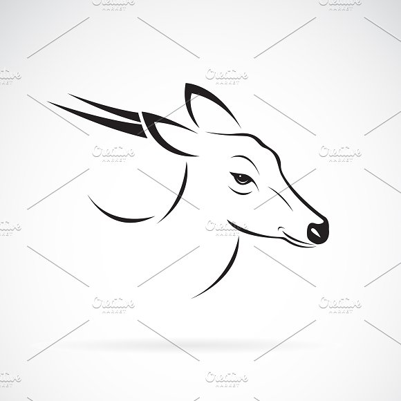 Vector of Barking deer.Wild Animals. in Graphics