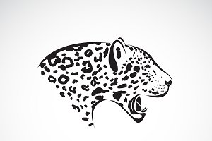 Vector of leopard head. Wild Animal.