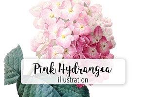 Flowers: Vintage Pink Hydrangea