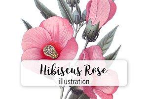 Flowers: Vintage Hibiscus Rose