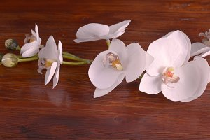 White orchid flower on wood