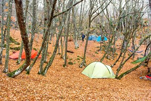 Camp with many tents in autumn fores