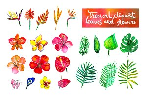Tropical flowers watercolor set