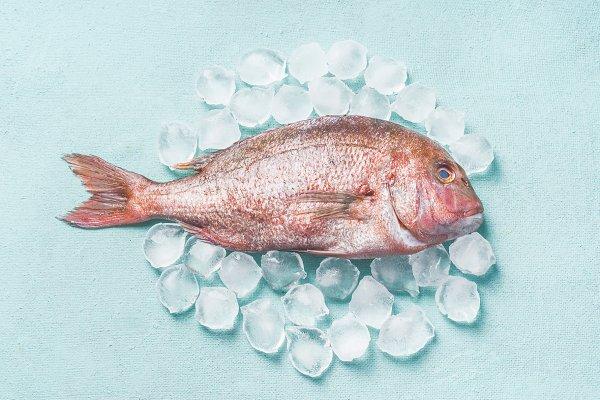 Raw whole fish on ice cubes