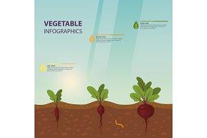 Infographic or infochart of beet