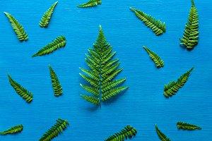 green fern branch
