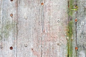 Weathered Wood.JPG