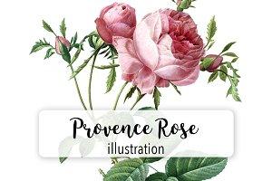 Florals: Vintage Provence Rose