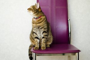 Tabby cat sitting on a chair