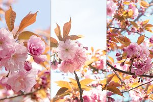 Sakura flowers spring set.