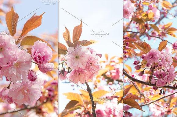 Sakura flowers spring set.