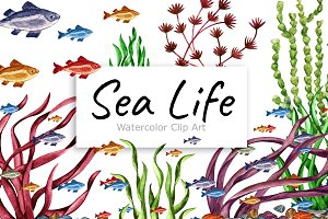 Watercolor Sea life