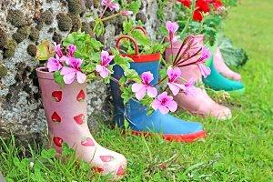 Pink Geraniums in Wellington Boots