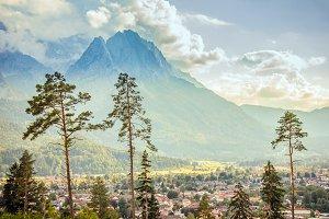 Bavaria Pine