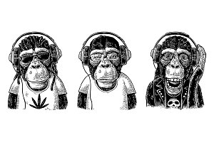 Monkeys in headphones. Hipster with