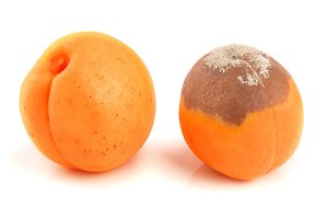 rotten and good apricot isolated on