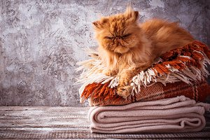 Ginger cat lying on a stack of