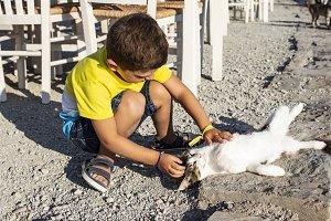 Adorable little boy caressing a cat